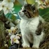 Kitten near flowers
