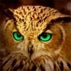 Owl with green eyes
